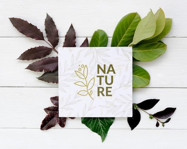 自然とトップビューフレームの葉の概念