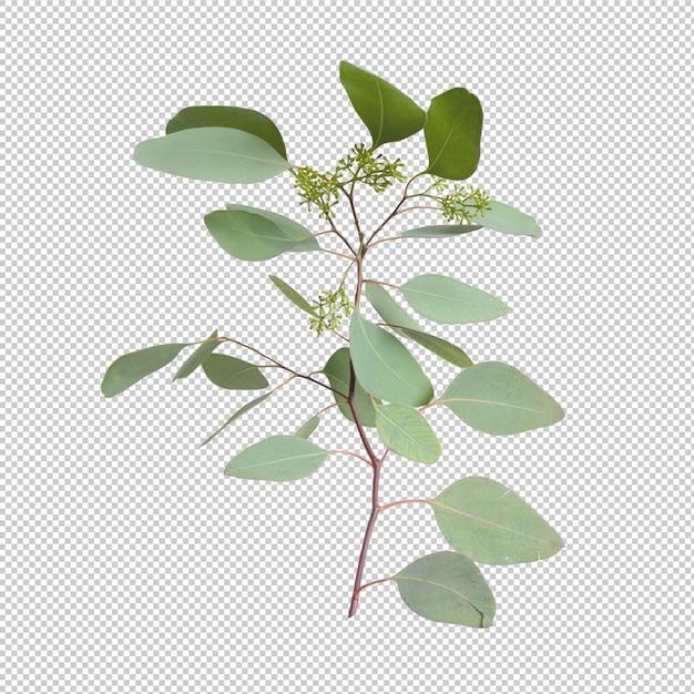 Листья эвкалипта изолированы