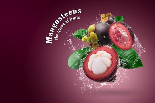 Вода брызгает на мангостанов королеву фруктов на красном фоне