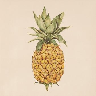 水彩スタイルのパイナップルのイラスト