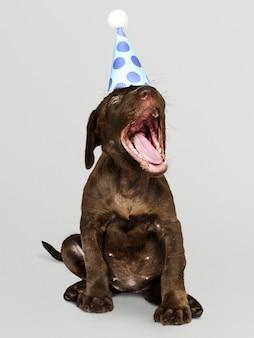 パーティーハットを身に着けている愛らしいラブラドールレトリーバー子犬