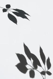 白い壁に葉の影