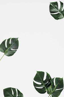 葉のモックアップの背景