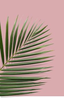 ピンクの地面に夏のバイブレーションのある熱帯の葉