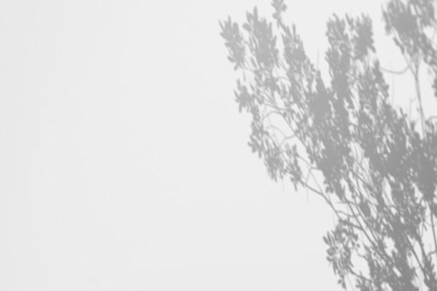 白い壁に木の影