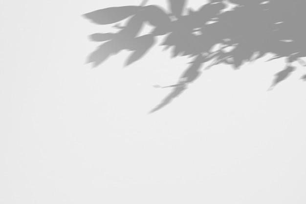 葉と白い壁に花の影