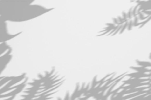 白い壁に影のヤシの葉の夏