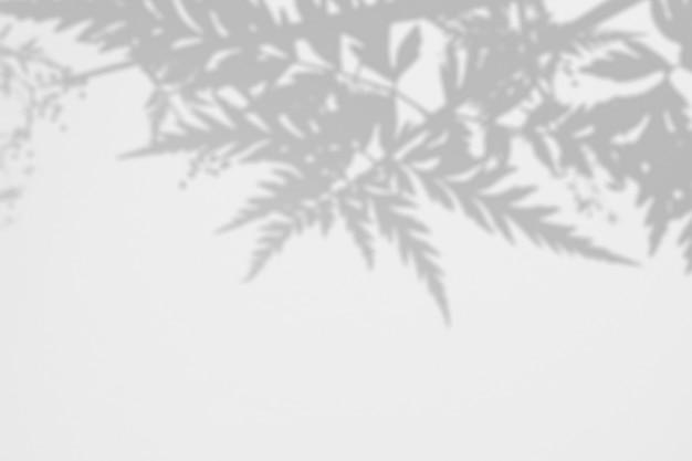 白い壁にシダの葉の影