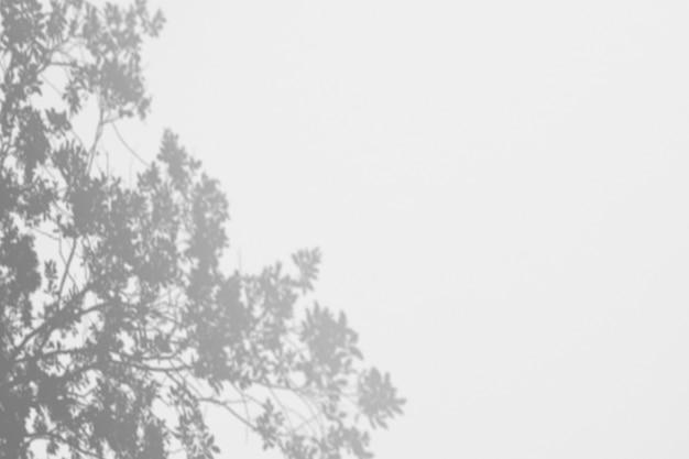 白い壁に影の木