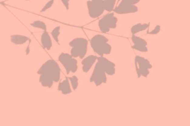 ピンクの壁にエキゾチックな野生植物の影