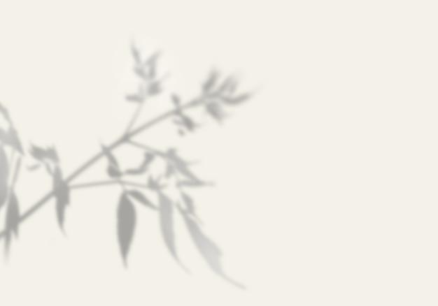 Тень экзотического растения на белой стене.