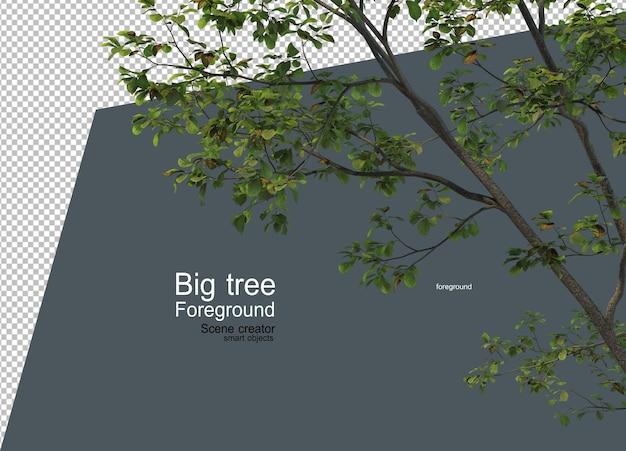 さまざまな種類や形の前景にある大きな木