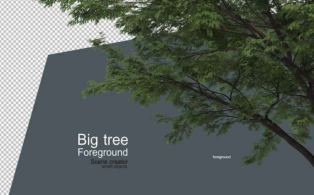 다양한 유형과 모양의 전경에 있는 큰 나무
