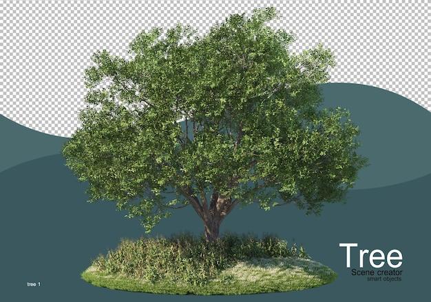 들판 한가운데있는 큰 나무