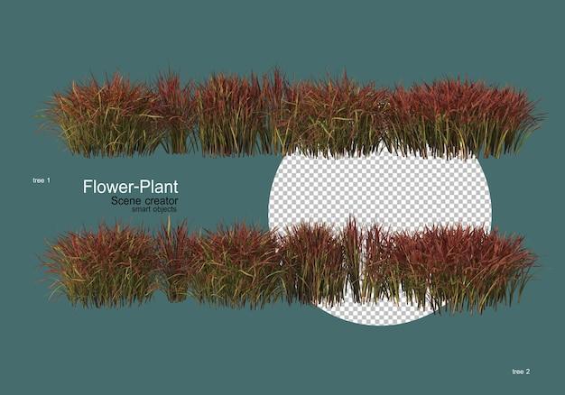 Большое разнообразие цветов и растений различной формы