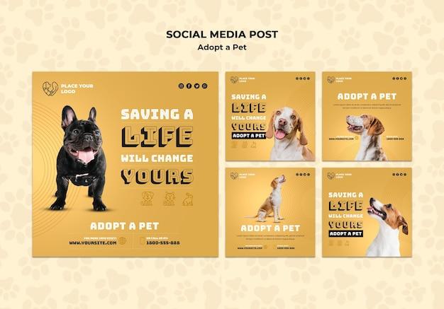 애완 동물 개념 소셜 미디어 게시물 템플릿 채택