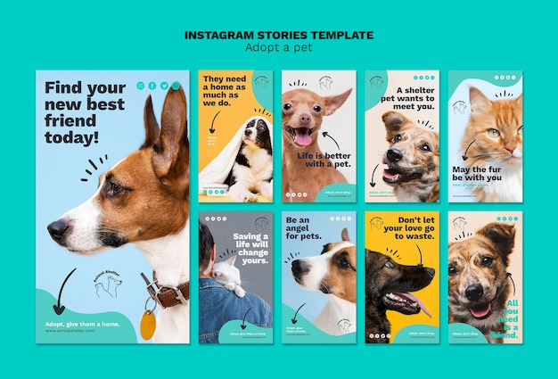 Adopt a pet instagram stories