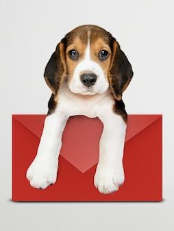 赤い封筒モックアップと愛らしいビーグル犬の子犬