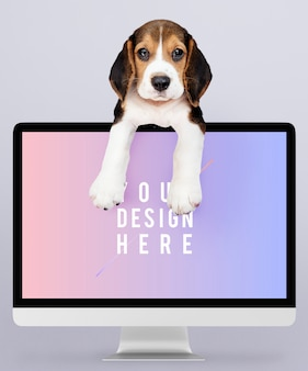 Adorable beagle puppy with a computer monitor mockup