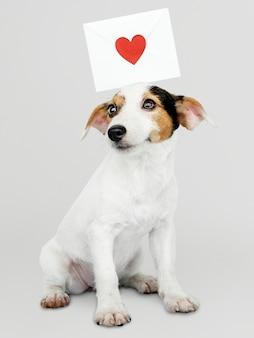愛の手紙モックアップと愛らしいジャックラッセルレトリーバー子犬