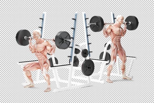Анатомическая иллюстрация упражнения на корточки со штангой