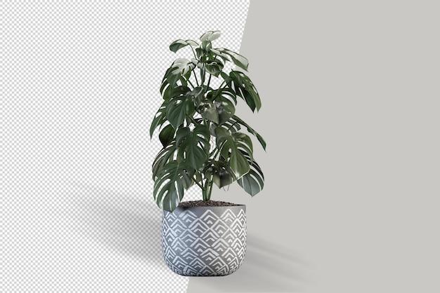 3dレンダリングでポット内のモンステラ植物のさまざまな角度