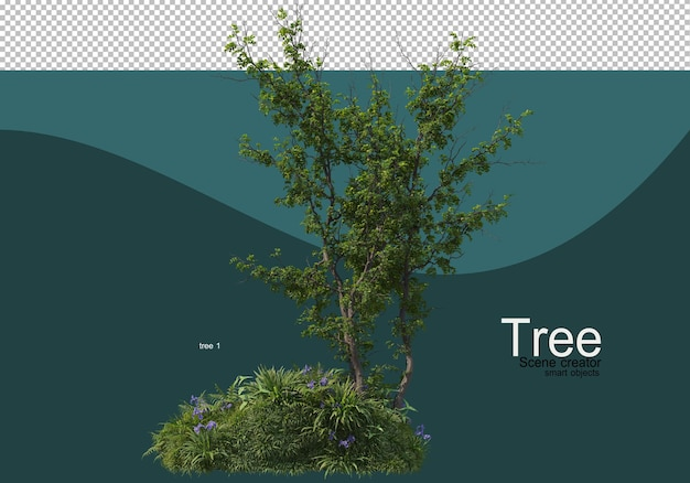 Arrangement of various trees and grasses