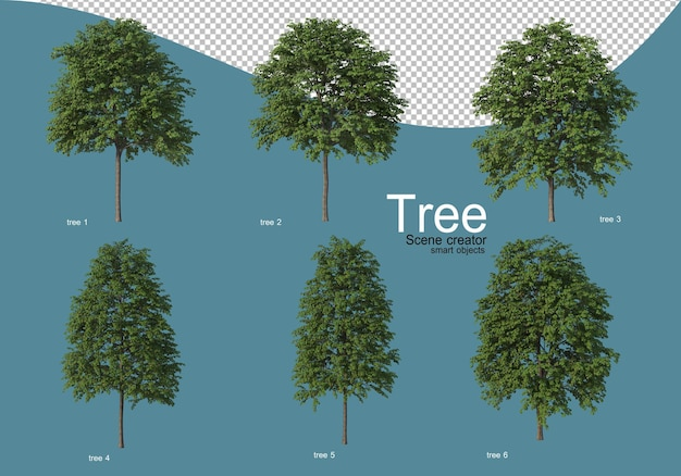 Arrangement of various types of trees in different colors