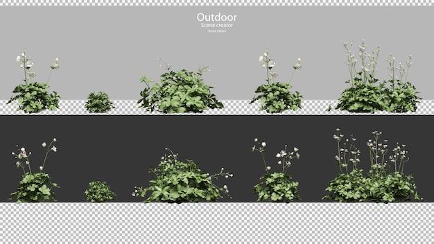 アストランティアの主な白い植物と花セット