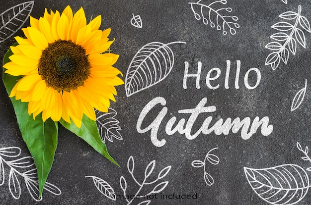 Autumn background with a yellow sunflower on dark concrete. space for text.