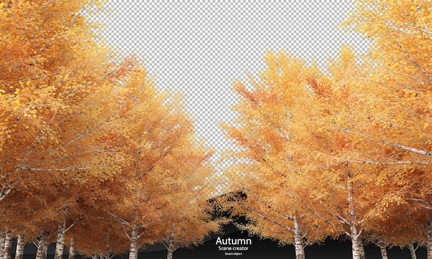 Осень березы березы осенью отсечения путь
