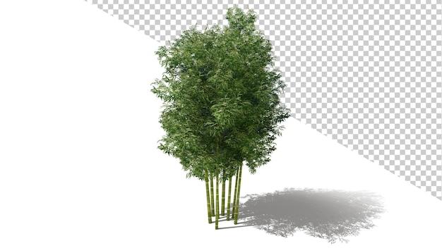 Бамбуковое дерево с изолированным деревом 3d визуализации