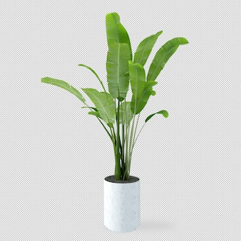 Banana tree in pot in 3d rendering
