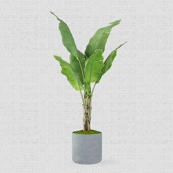 Banana tree in pot in 3d rendering