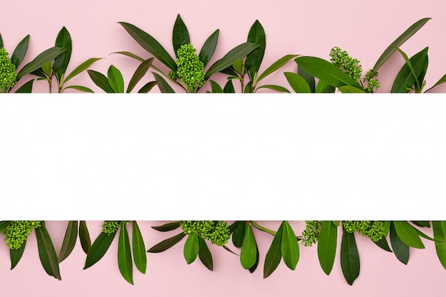 Banner with green leaves on pink pastel background.