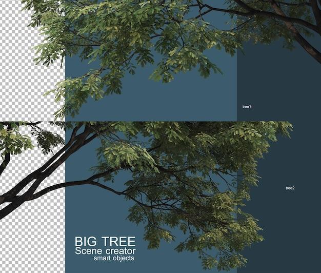 아름 다운 큰 나무 가지 전경