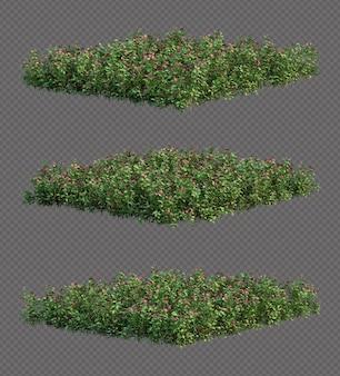 美しい岬ツルニチソウの木のコレクション