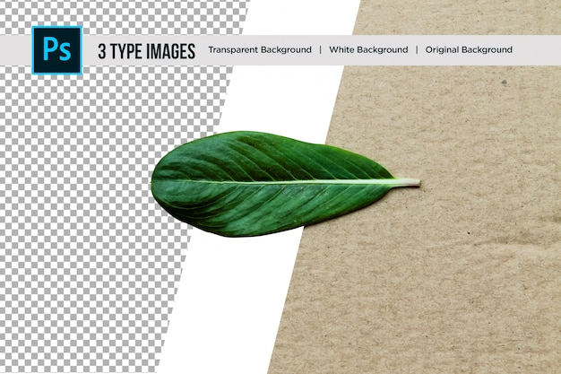 Beautiful nature green leaf with 3 different type of background
