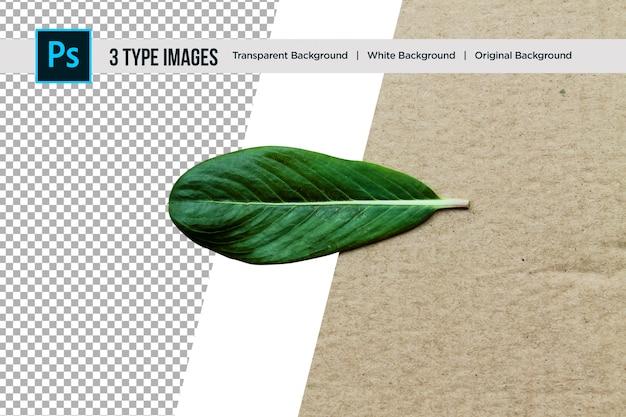 Красивая природа зеленый лист с 3 различными типами фона
