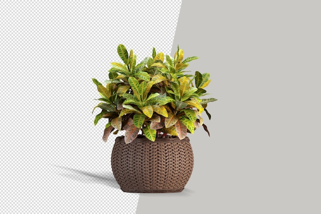 分離された美しい植物の3dレンダリング