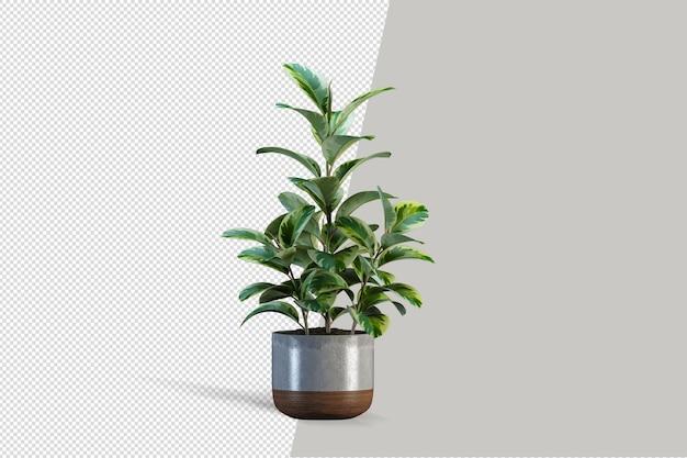 分離された美しい植物の 3 d レンダリング