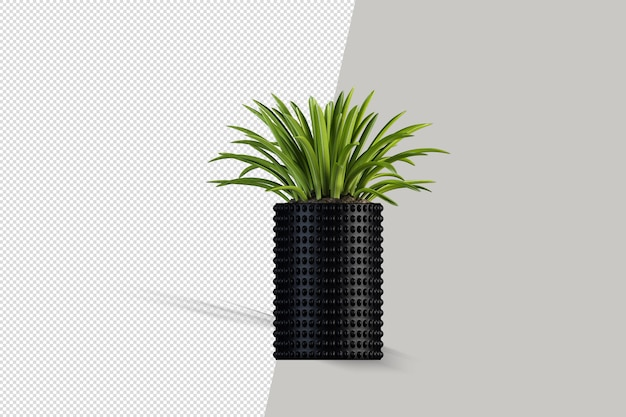 Beautiful plant 3d rendering isolated