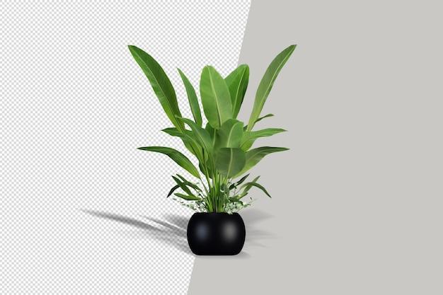 分離された3dレンダリングの美しい植物
