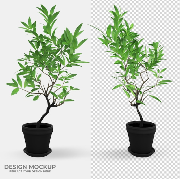 Beautiful plant in pot in rendering scene creator