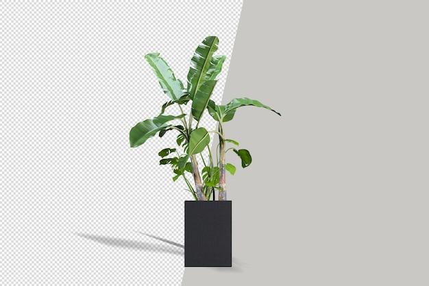 分離された3dレンダリングの美しい鉢植えの植物