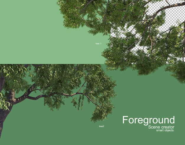 美しい木の枝の前景レンダリング