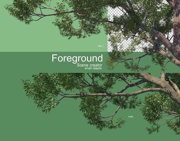 아름다운 나뭇 가지 전경 렌더링