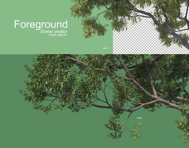 Beautiful tree branches foreground rendering