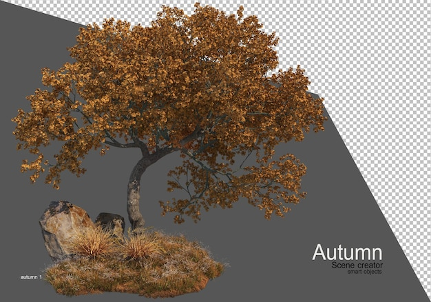 秋の美しい木の園芸