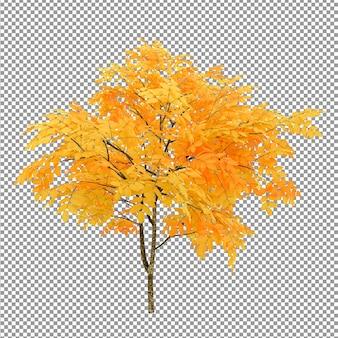 豊かな葉の前景が分離された美しい木